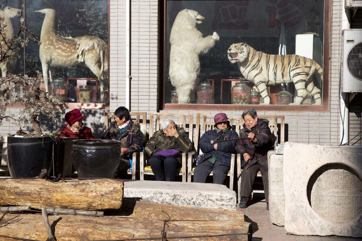Čína, zvieratá