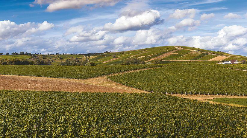 V okolí Sancerre v povodí Loiry sa rodí jeden z najkrajších savignonov sveta.