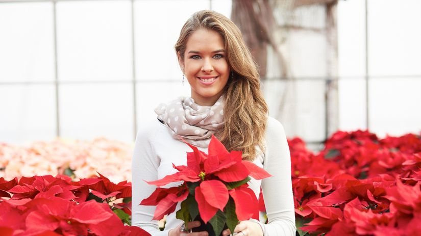 vianočná ruža, dekorácia, výzdoba