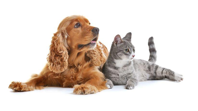 pes, mačka, chov