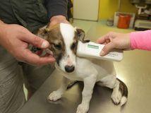 čipovanie psa, pes, veterinár