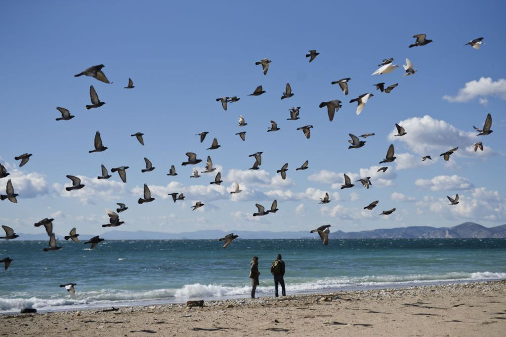 Grécko, more, pobrežie, piesok, vtáky, holuby, dvojica, prechádzka