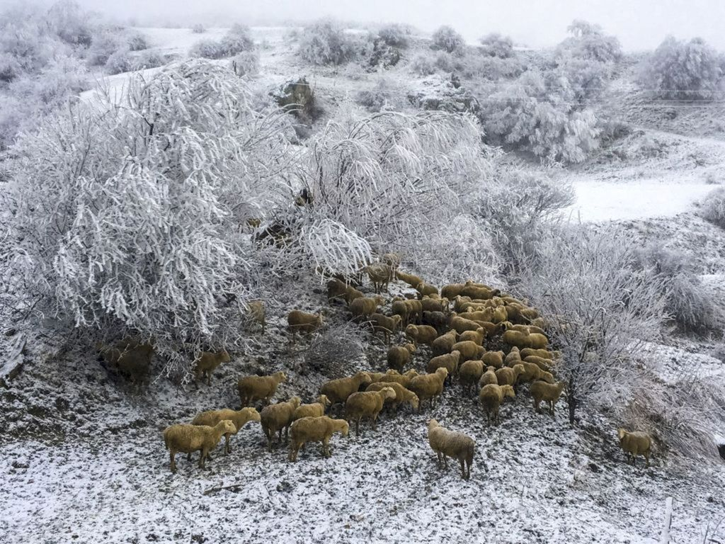 Kosovo, ovce, zima, sneh, mráz, zvieratá, stádo, chov