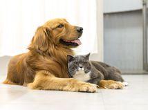 pes, mačka, domáce zvieratá