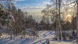 zima, Rusko, sneh, mráz, les