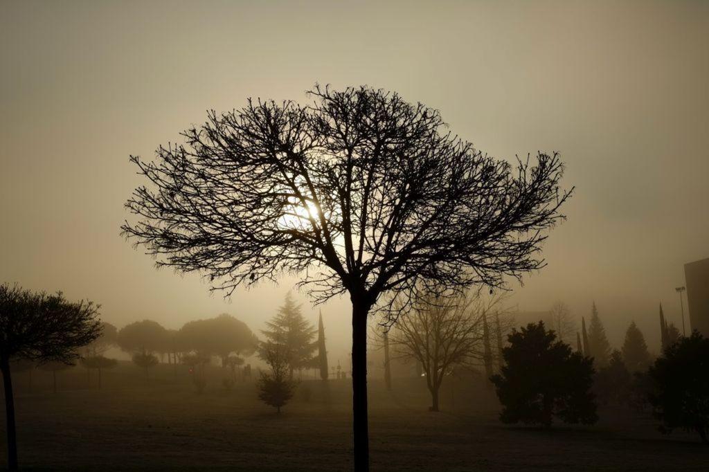 strom, príroda
