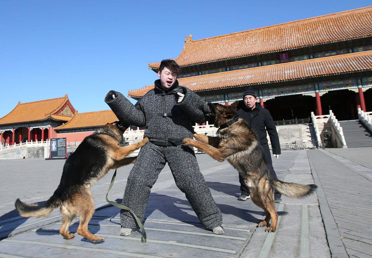 Čína, psy, cvičenie, výcvik
