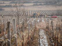 Diaľnica zabrala vinohrady