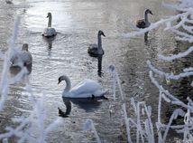 počasie zima mrazy sneh príroda