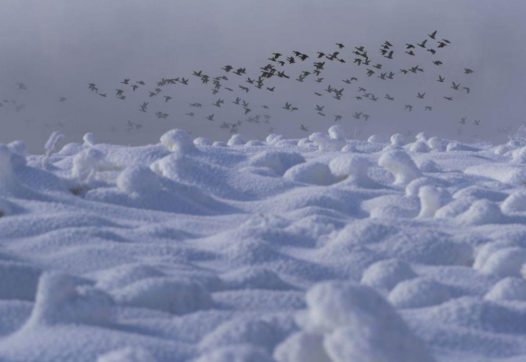 zima, sneh, mráz, počasie, Bielorusko