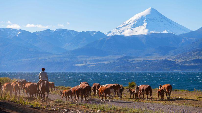 krajina, hory, kravy, príroda