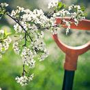jar, marec, záhrada