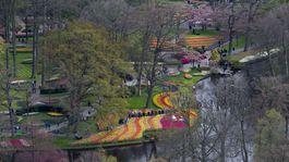 Holandsko, kvety,