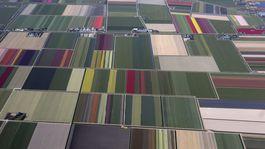 Holandsko, tulipány, polia
