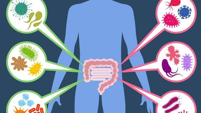baktéria, baktérie, črevo, črevá