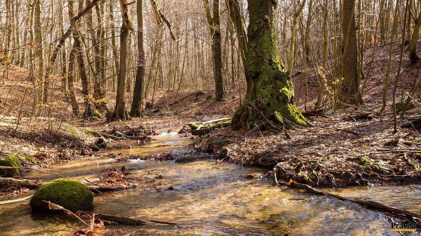 rieka, les, Vydrice