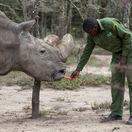 keňa, nosorožec tuporohý severský, sudan