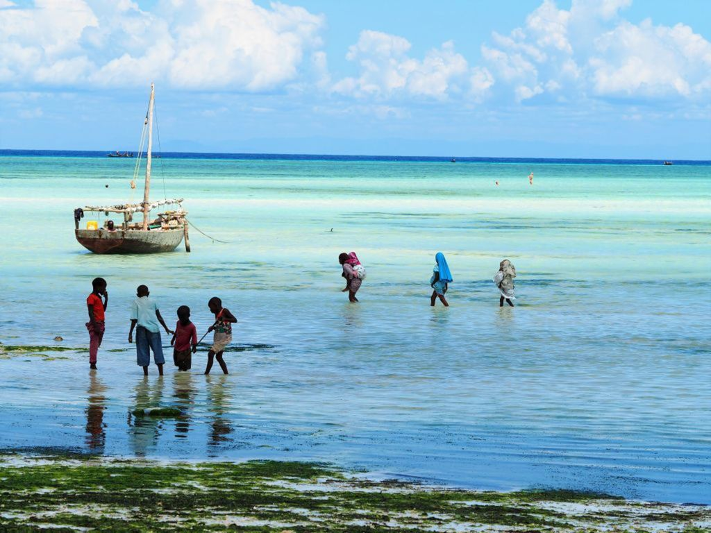 Zanzibar, more, oceán, odliv