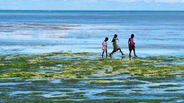 Zanzibar, oceán