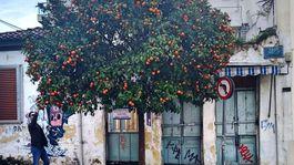 Atény, Grécko, strom, mandarínka