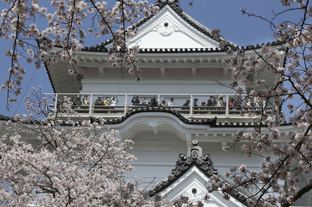 Japonsko, kvety, strom, čerešňa, kvitnutie, jar
