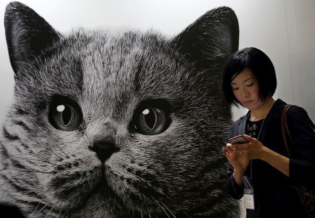 Japonsko, mačka, mobil, telefón,