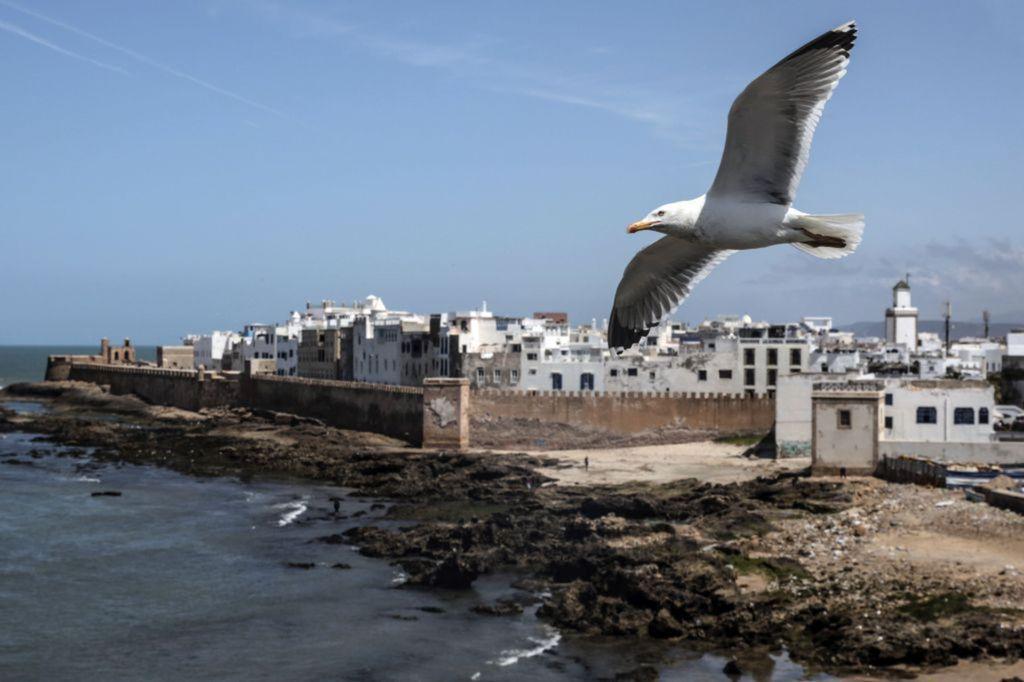 Maroko, čajka, more