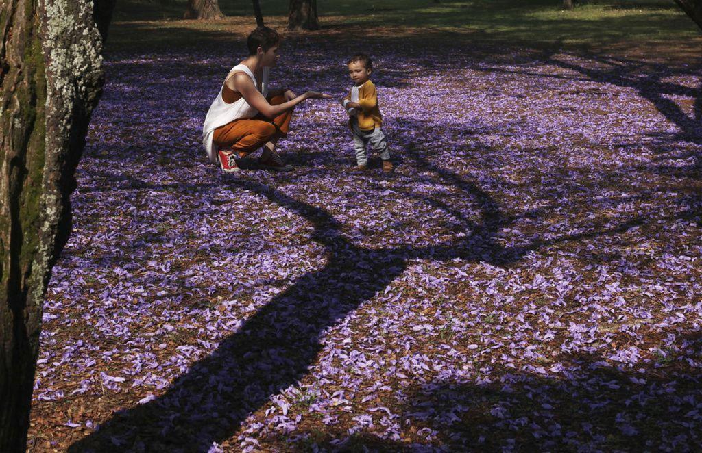 Mexiko, jar, dieťa, kvety,