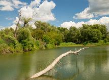 barat, Barát, dunaj, danube parks 2.0, ochranar, priroda, voda, rieka, zelen, dunajske luhy, luzne lesy