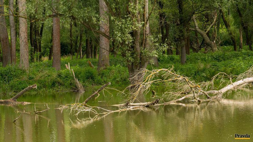 Popadané stromy sú neodmysliteľnou...