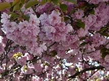 Piešťany, jar, počasie, príroda