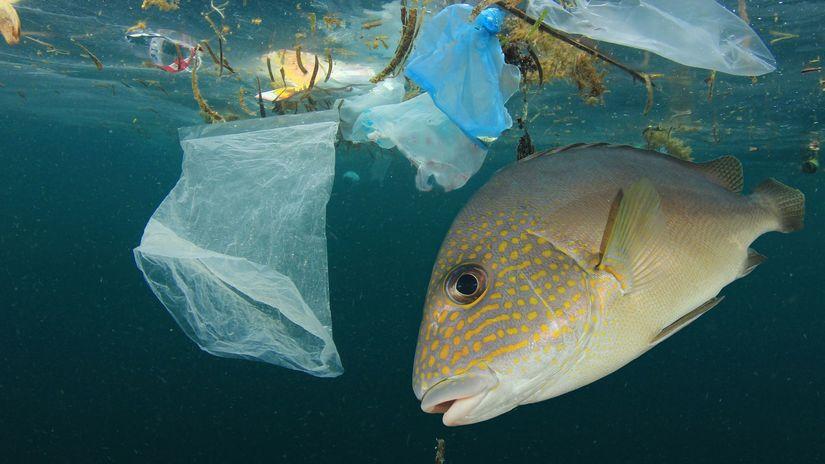 ryby, plasty, baktérie, more, odpad