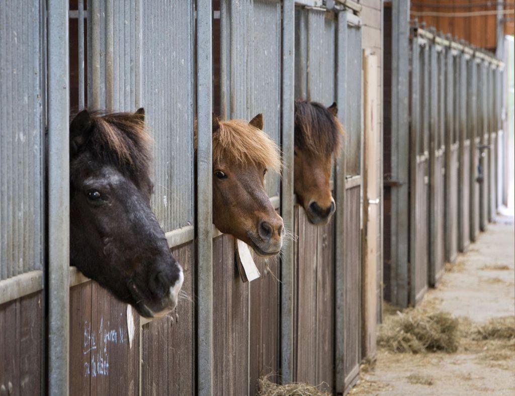 kone, stajňa,