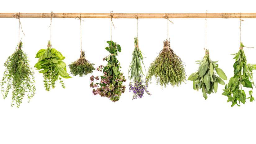 bylinky, sušenie