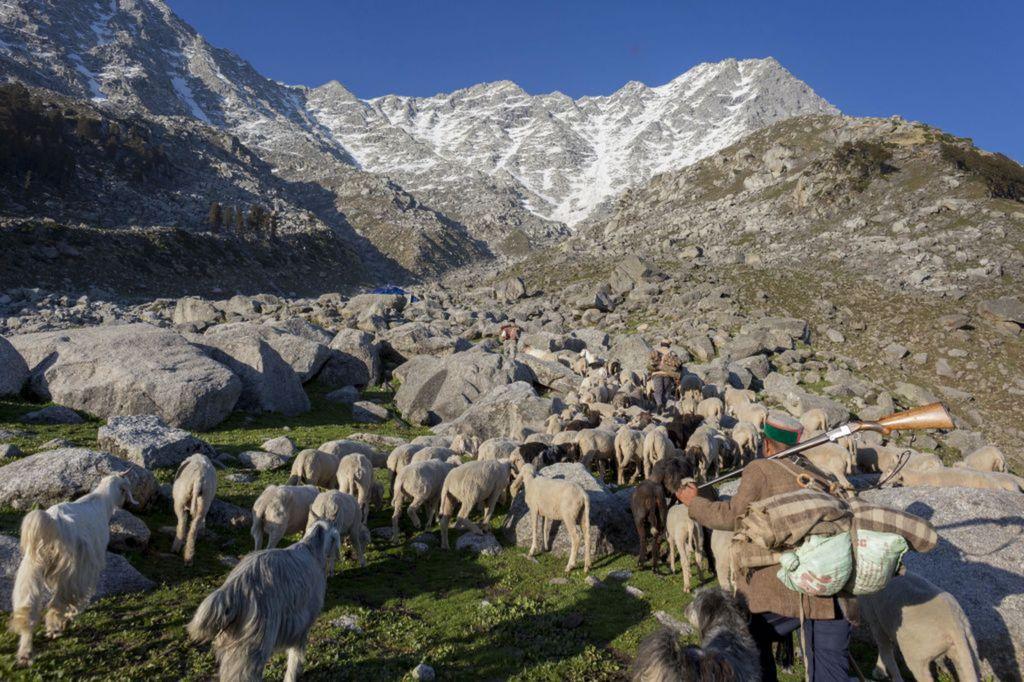 India, pastier, kozy