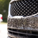 hmyz, auto, nečistota