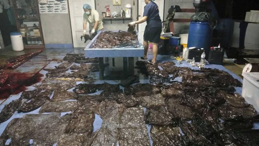 plast, veľryba, odpad