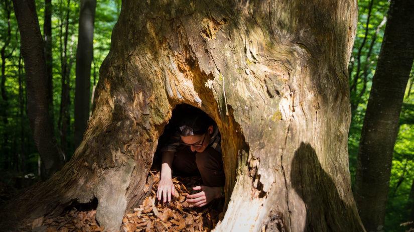 poloniny, dub, príroda, lesy