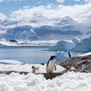 Južný pól tučniaky