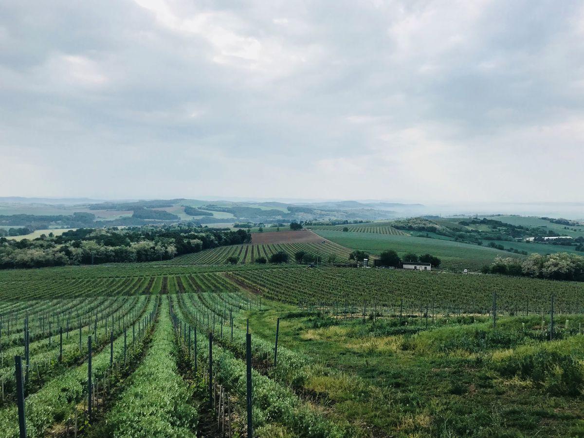 Krupinská pahorkatina s vinohradmi spoločnosti Movino.