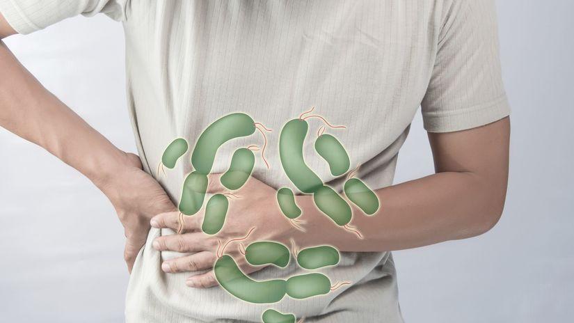 Salmonelóza, infekcia, prevencia, baktérie,