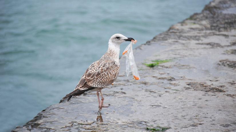 vtáky a plastový odpad