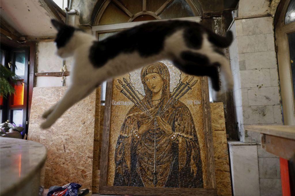 Rusko, mačka, Panna Mária, obraz,