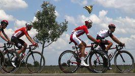 Tour de France, motýľ