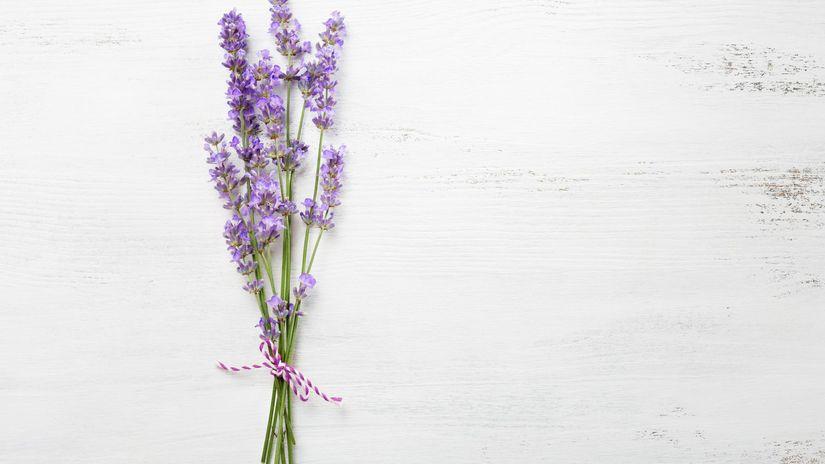 levanduľa, bylinky, éterické oleje