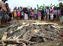 indonézia, krokodíl, masaker