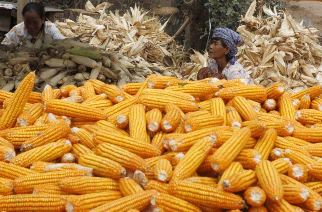 kukurica, Kambodža