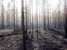 švédsko, požiar, les