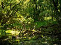 Dunaj, príroda, Lužné lesy