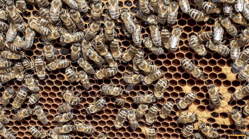 Včely na pláste
